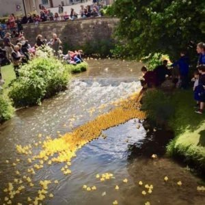 Duck race river
